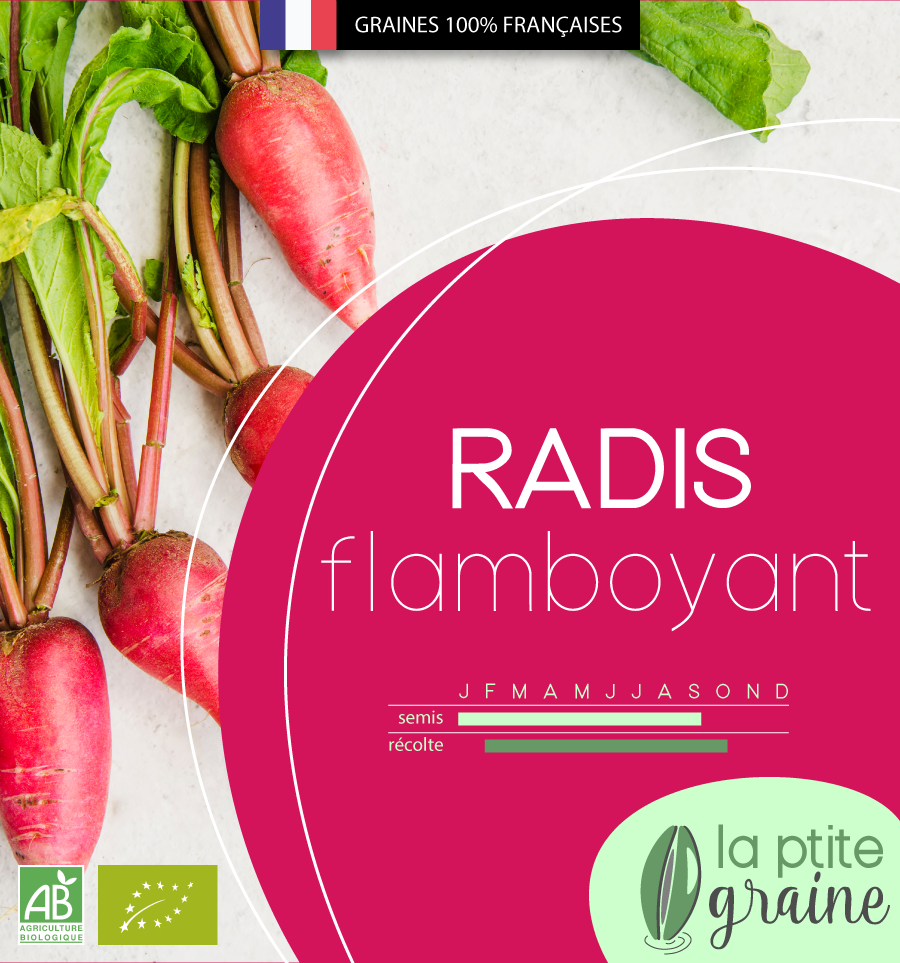 Packaging alimentaire graines radis facing